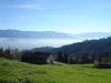 Nebel im Rheintal